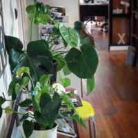 Il y a de belles plantes...